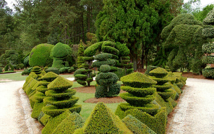 copyright Pearl Fryar Topiary Garden