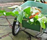 garden cart, or wheelbarrow? expert thoughts on which one's the better fit (or gift)