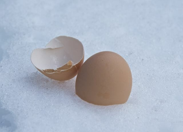 eggshells for blue jays