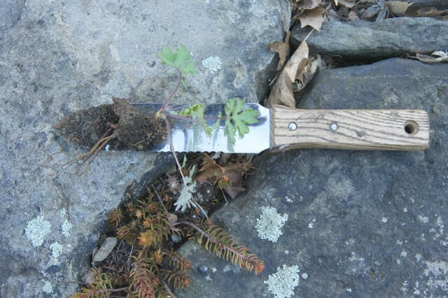 seedling and knife