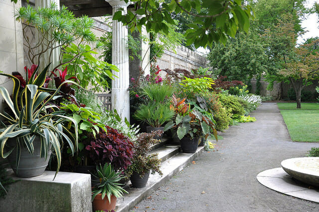 Container Garden Design plants add jungle feel to garden 17455434178_43ce8d01a1_z