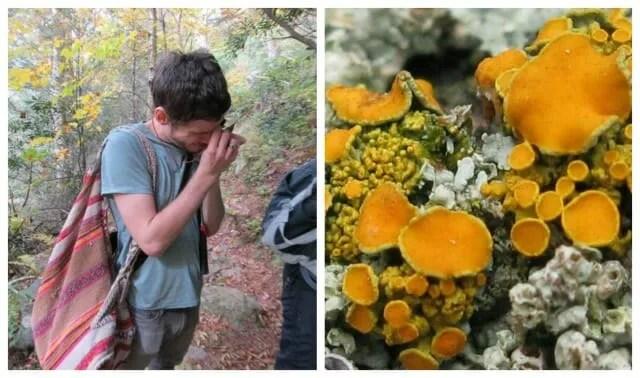 james lendemer lichens 3