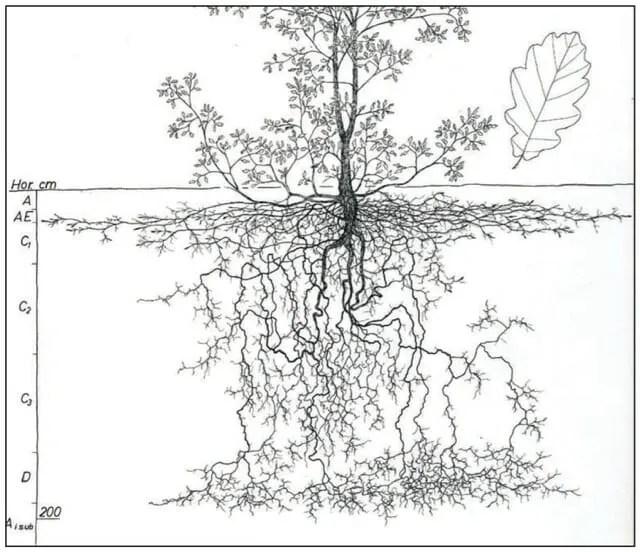 u0026 39 understanding roots  u0026 39  with robert kourik