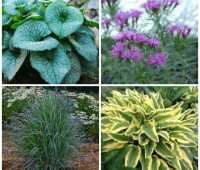 time-tested perennials, with kathy tracey of avant gardens