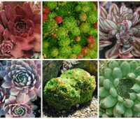 getting creative with succulent hens & chicks, with katherine tracey