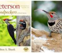 a close look at those hard-working woodpeckers, with stephen shunk