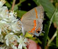 notable natives, from mountain laurel to milkweed, with andy brand