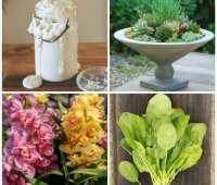 a way to garden's top garden stories of 2016