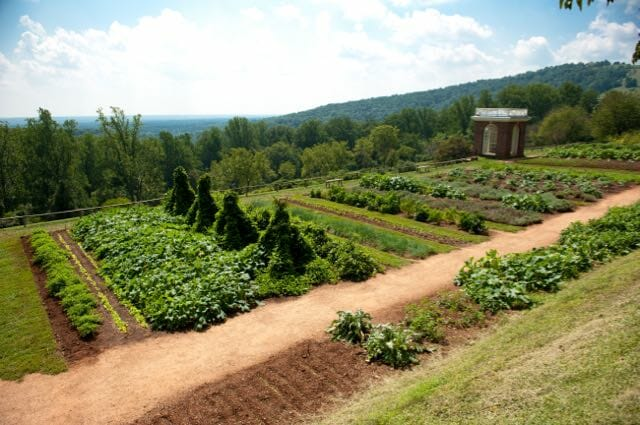 CR3116 Rows of plants in gardens of Thomas Jefferson's Monticello in Charlottesville VA