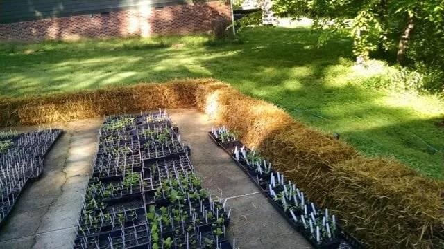straw bales garden beds at craig lehoullier's yard