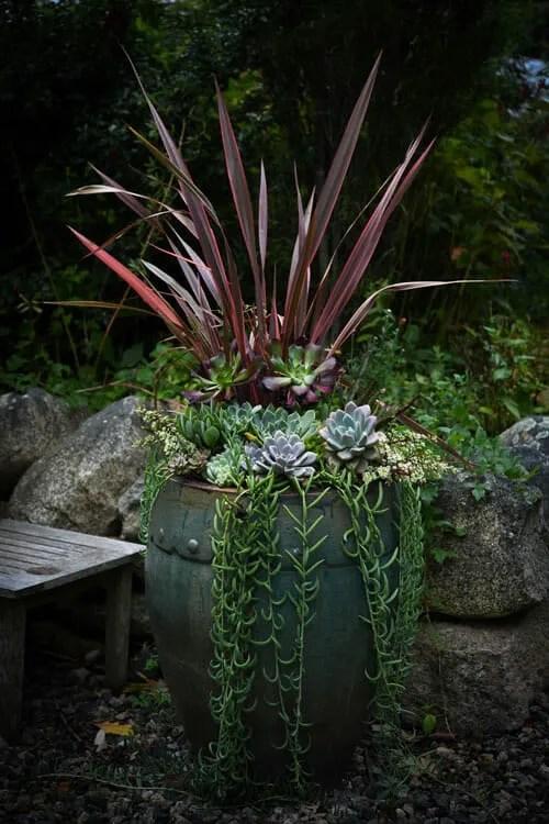 succulent container with Phormium