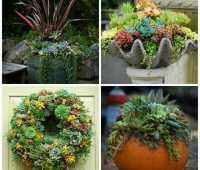get creative with succulents, plus spring rehab, with avant gardens' katherine tracey