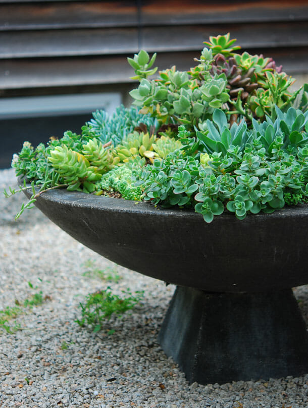 large garden container of succulents