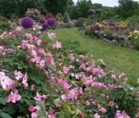 organic rose care, with scott arboretum's adam glas