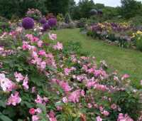 organic rose care, with scott arboretum's adam glas