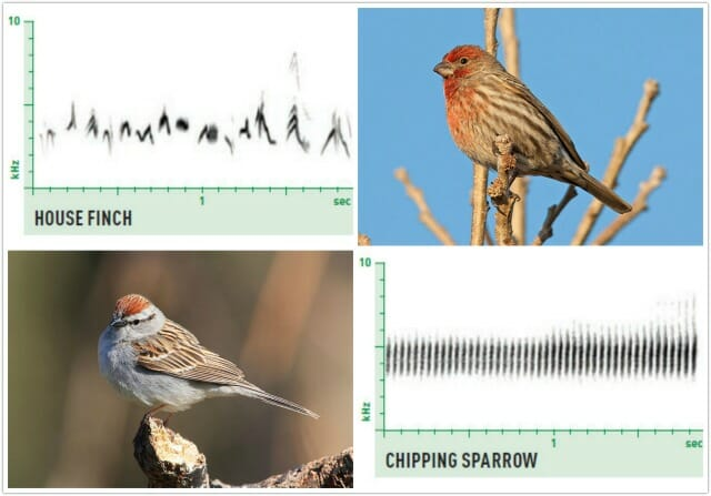 Birding By Ear With Nathan Pieplow How To Listen To What Birds Say