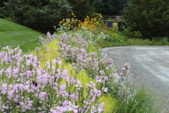 Plants Are The Mulch And Other Nature Based Design Wisdoms With