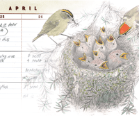 'the naturalist's notebook,' with nathaniel wheelwright