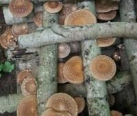 april 21 mushroom-growing workshop at my garden, with john michelotti