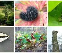 9/15 workshops: find & encourage the wild in your garden, with conrad & claudia vispo