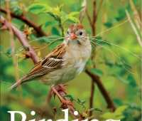better birding and fascinating sparrows, with kathryn schneider