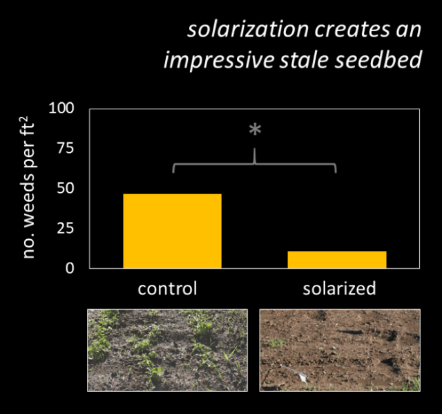 how soil solarization kills weeds