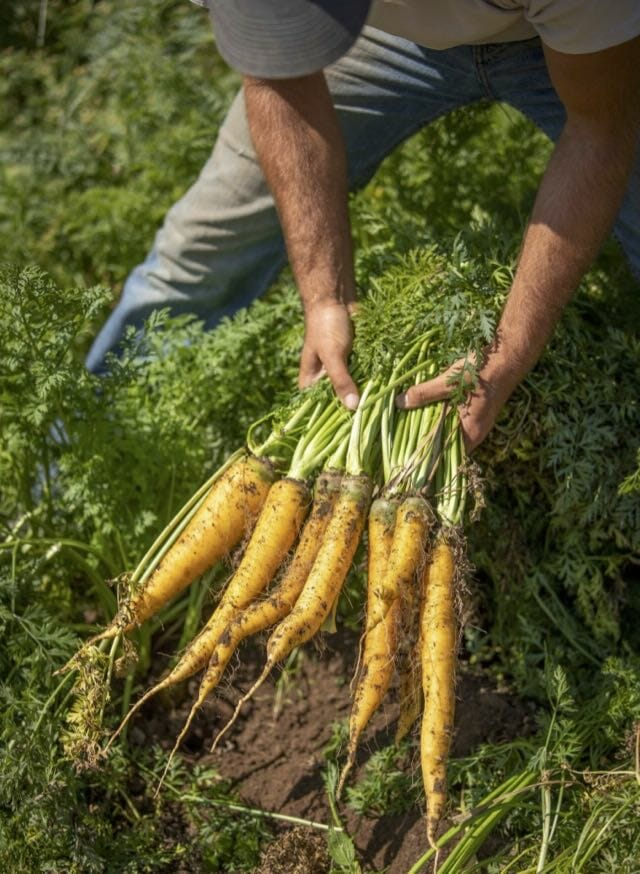 10 top tips for growing root vegetables
