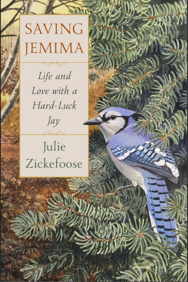 saving jemima: life and love with a hard-luck jay,' with