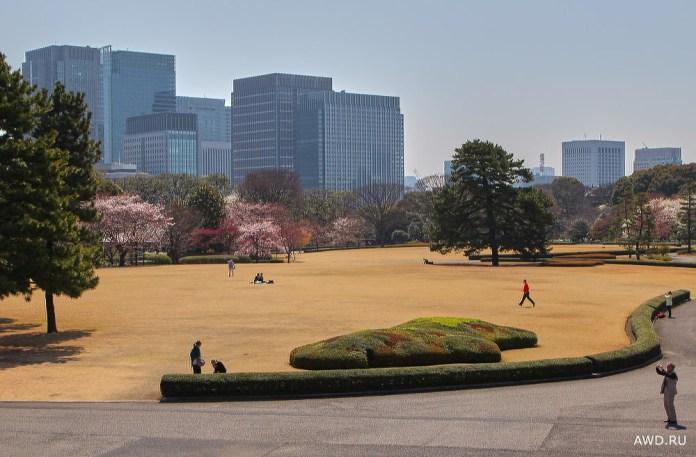 Путешествие в Японию на цветение сакуры