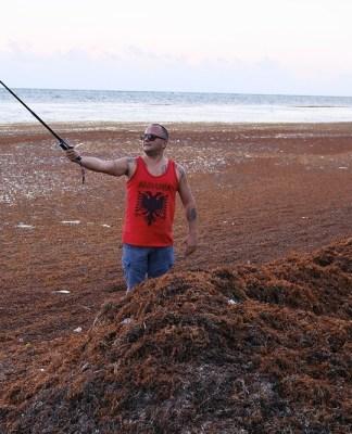 Водоросли на пляжах Мексики