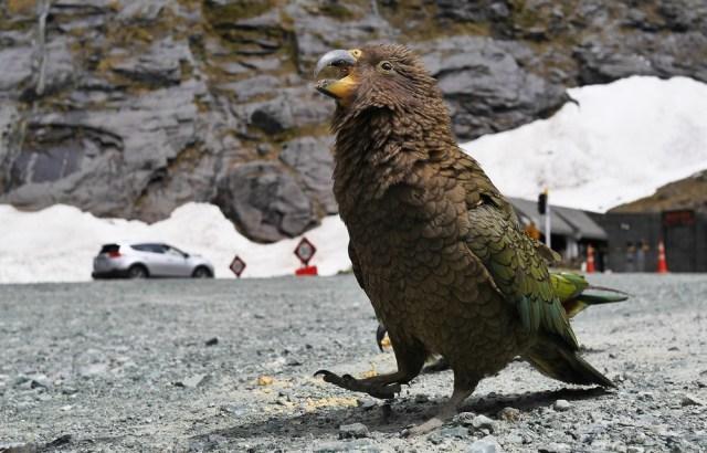 Милфорд-Саунд Новая Зеландия отзывы