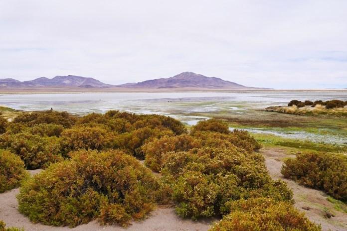 Лагуна Тара (Salar de Tara) в Чили