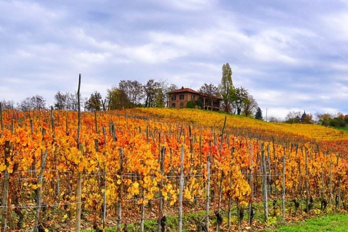 Италия Пьемонт винная дорога