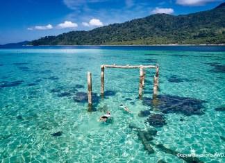 Кто кусается в море в Тайланде