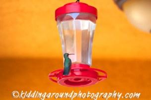 The Hummingbird Casita's namesake