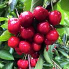 Hood River fruit