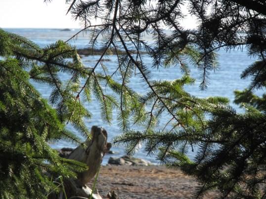 View from Cape Alava campsite