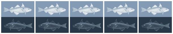 5 fish collage