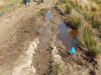 TYRE RUTS ALIVE WITH TADPOLES