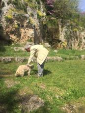 Petting dogs at the School of Aristotle