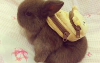 bunny with a backpack