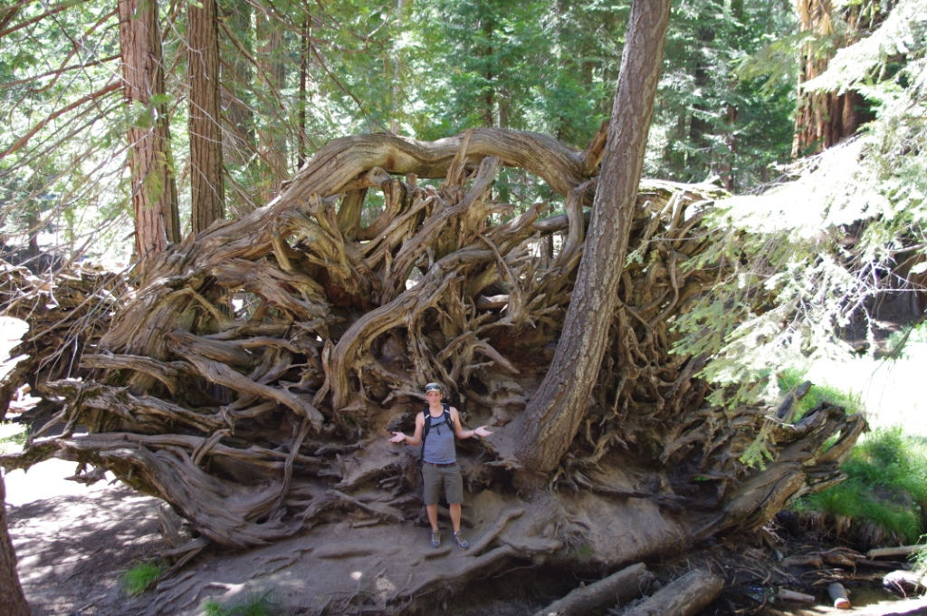 Sequoia NF (CC awesomatik.com)