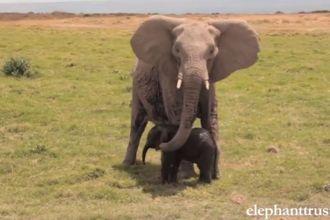 elephanttrust screenshot