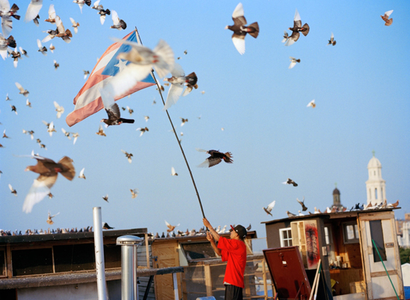 pigeonflyers22