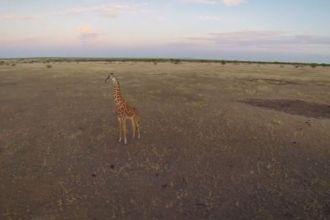 Beetlecopter in the Serengeti Screencap2