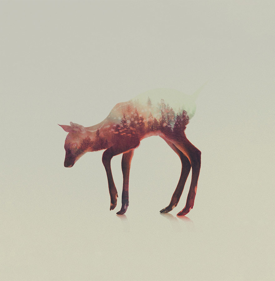 animals_landscapes_doubleexposure_14