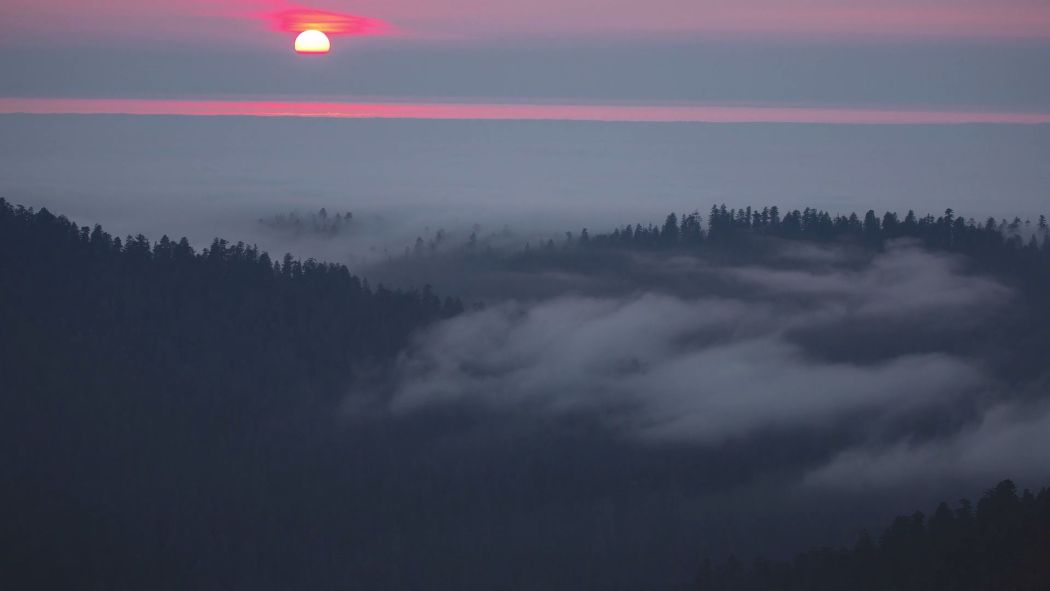 Mtjp Redwoods 4