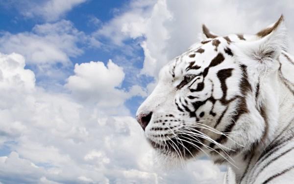 Wallpaper HD Beautiful Animals | Awesome Desktop Wallpapers