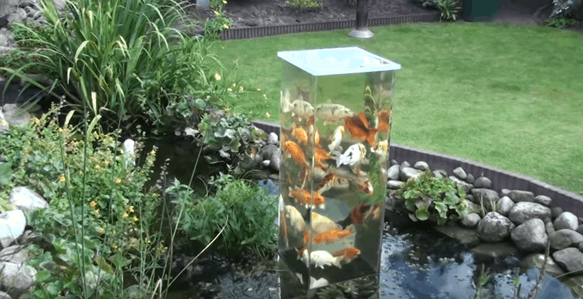 How Build Fish Pond