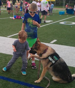 Child approaching dogs : Ottawa, Ontario